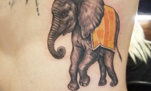 Baile animal tattoo male side waist colored icon tattoo picture