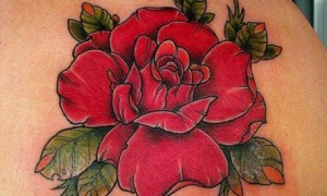 Beautiful Red Rose Tattoo On Right Back Shoulder